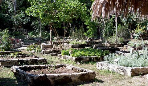 Landscaping Apna