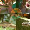 crococun-zoo-5b