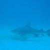 diving-xtabay-7b