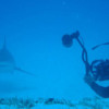 diving-xtabay-9b