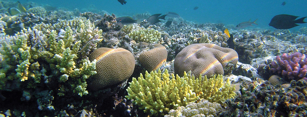 see fishes while snorkeling in puerto morelos