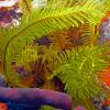 snorkeling-4b